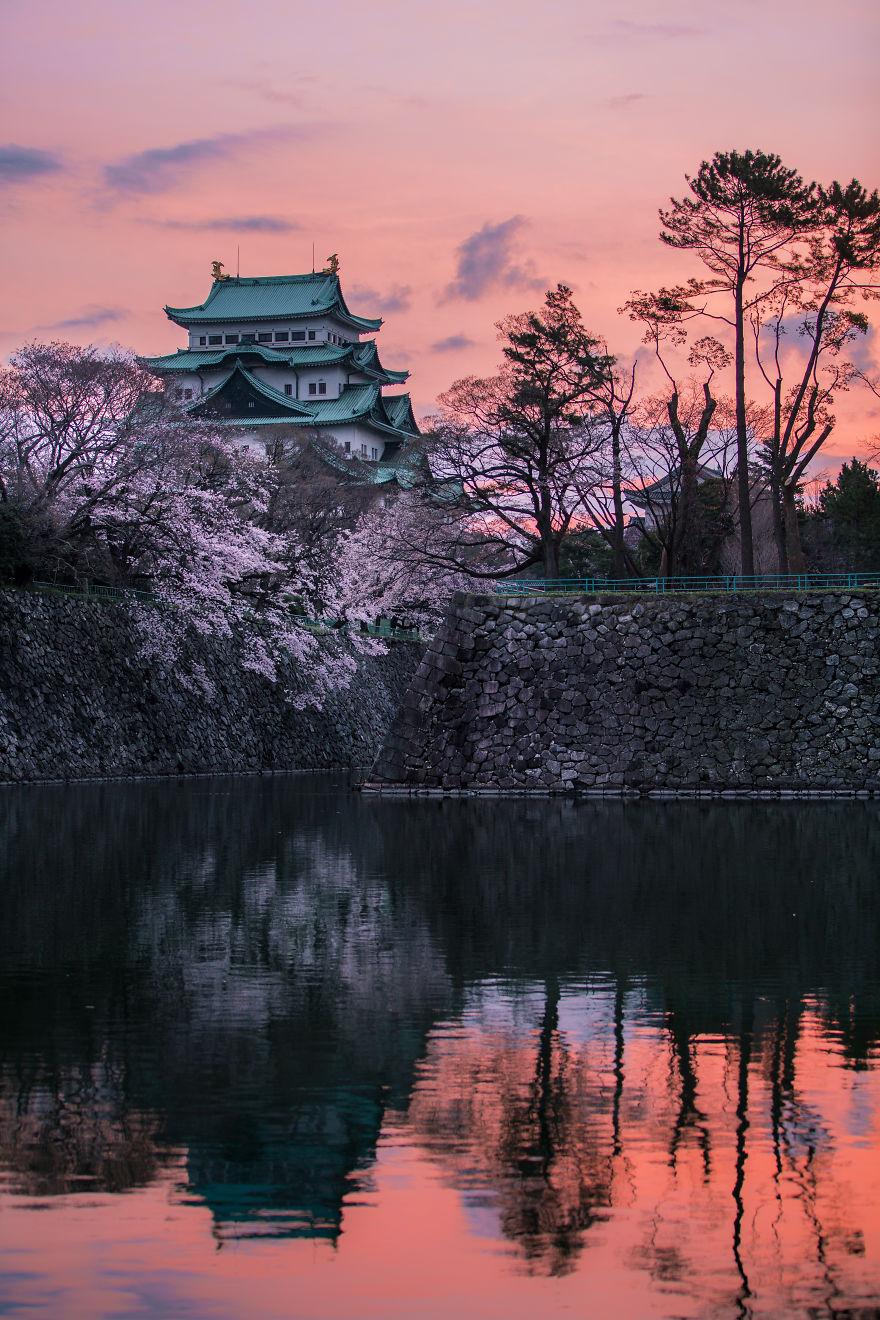 I-Captured-Sakura-Bloom-In-Japan-5abb3bd907902__880.jpg