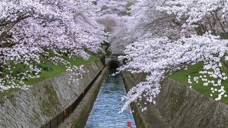 I-Captured-Sakura-Bloom-In-Japan-5abb3e9d9c222__880.jpg