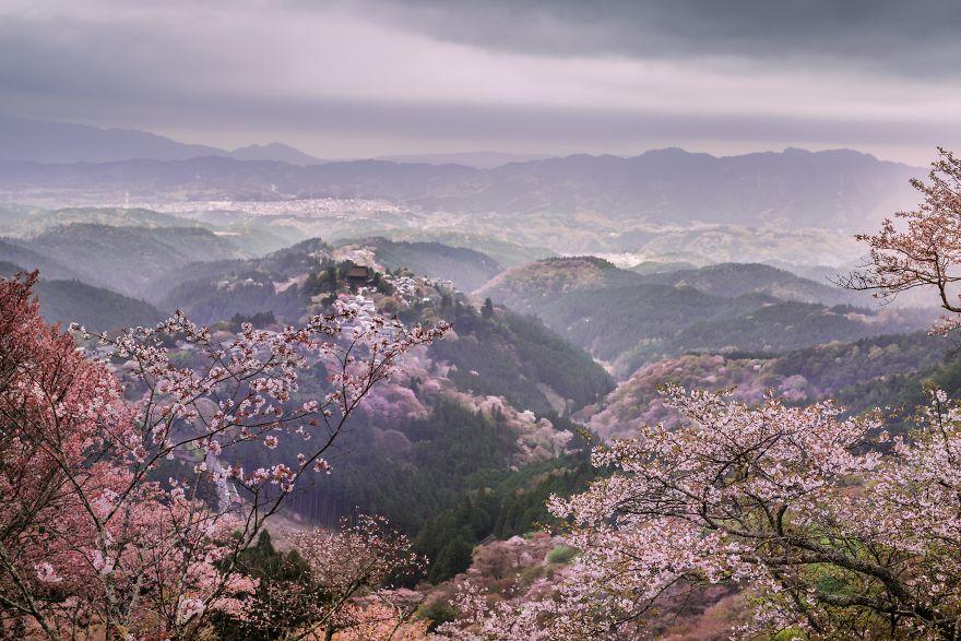 I-Captured-Sakura-Bloom-In-Japan-5abb68872470d__880.jpg