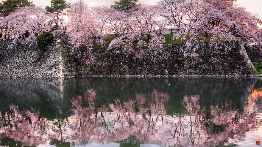 I-Captured-Sakura-Bloom-In-Japan-5abb68e5516a2__880.jpg