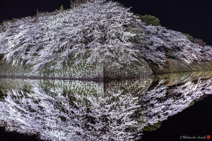 I-Captured-Sakura-Bloom-In-Japan-5abb691ed6af3__880.jpg