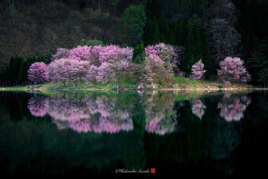 I-Captured-Sakura-Bloom-In-Japan-5abb6a0e48266__880.jpg