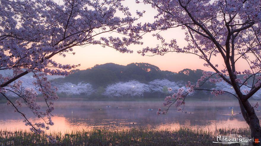 I-Captured-Sakura-Bloom-In-Japan-5abc1afaa6d90__880.jpg